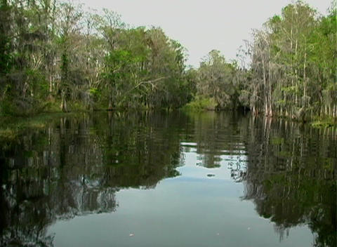 View from an Airboat (8) Stock Video Footage