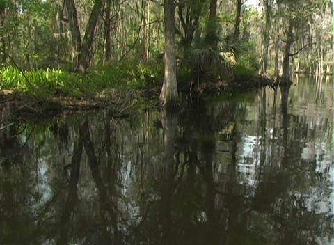 View from an Airboat (10) Footage