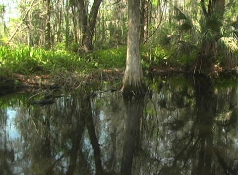 View from an Airboat (10) Stock Video Footage