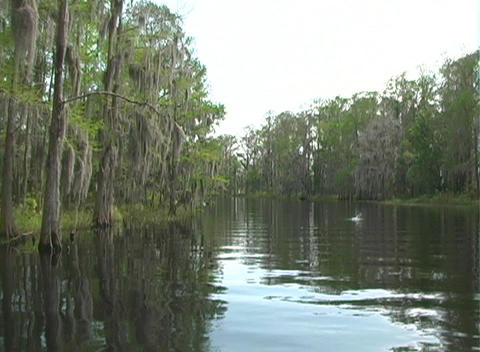 View from an Airboat (14) Footage