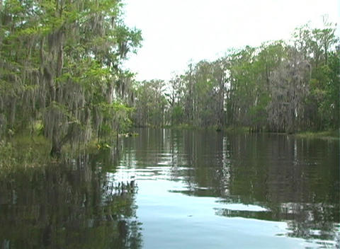 View from an Airboat (14) Stock Video Footage