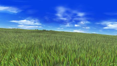 Grass B Animation