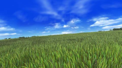 Grass B Stock Video Footage