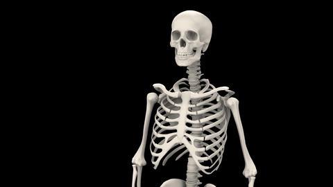 H Bone B Stock Video Footage