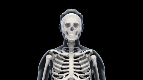 H Bone F Stock Video Footage