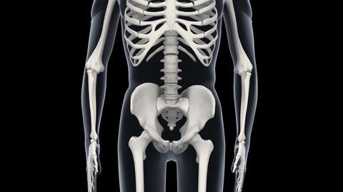 H Bone F Animation