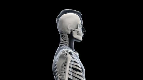 H Bone S Stock Video Footage