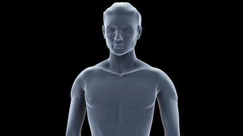 H C skin S Animation