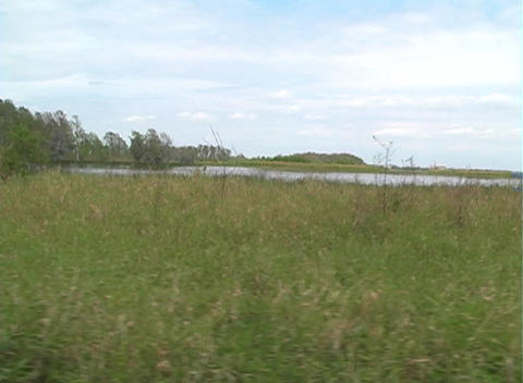 View from an Airboat (16) Stock Video Footage