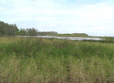 View from an Airboat (16) Footage