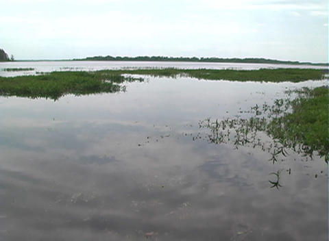 View from an Airboat (18) Stock Video Footage