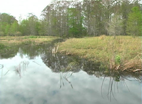 View from an Airboat (20) Stock Video Footage