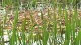 View From An Airboat (22) stock footage