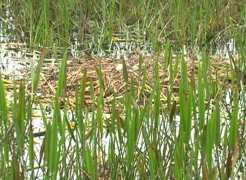 View from an Airboat (22) Footage