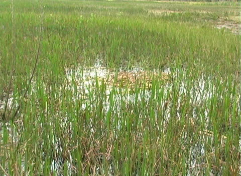 View from an Airboat (22) Stock Video Footage