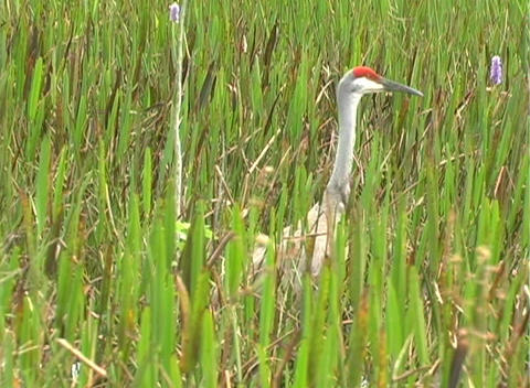 View from an Airboat (24) Stock Video Footage