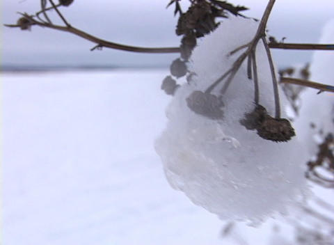 Snow-covered Tree Branch Stock Video Footage