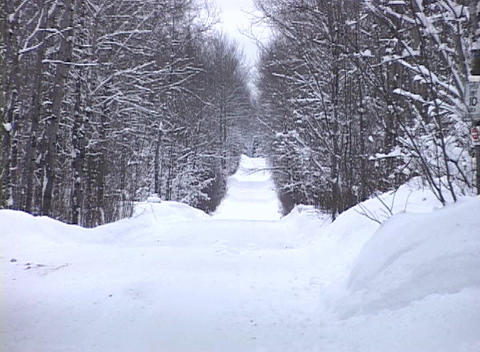 Snow-covered Forest Lane Footage