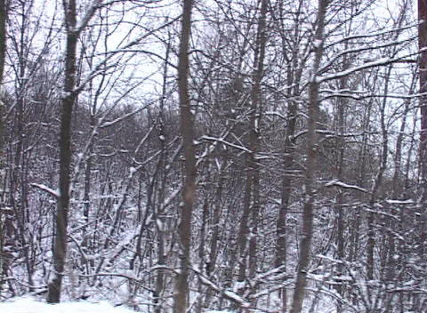 Tracking Shot of a Snowy Landscape (1) Stock Video Footage