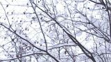 Snow -covered Trees, Low Angle stock footage
