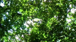 Spring Trees 스톡 비디오 클립, 영상 소스, 스톡 4K 영상