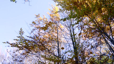 Autumn trees Stock Video Footage