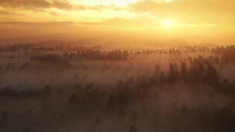 Morning Fog Stock Video Footage