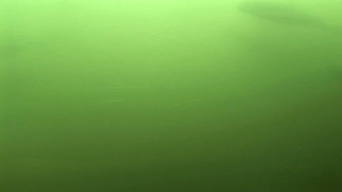 Fish Ladder Stock Video Footage