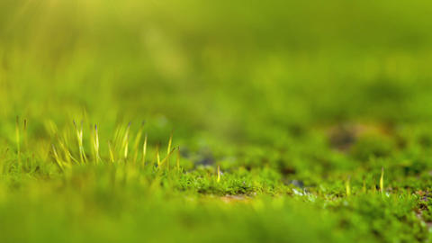 Moss In Spring Forest. Shot Slider stock footage