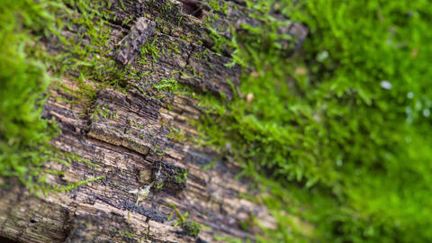 Moss, Close-Up On A Wooden Board Stock Video Footage