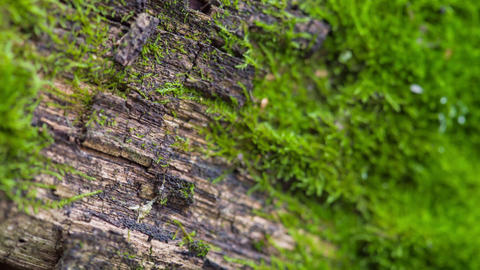 Moss, Close-Up On A Wooden Board Footage