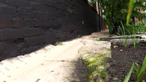 Passage between a lawn and a brick wall Stock Video Footage