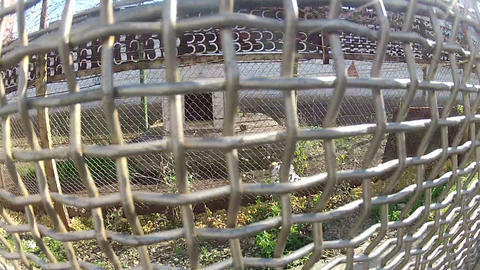 Prison Zone camp for prisoners Stock Video Footage