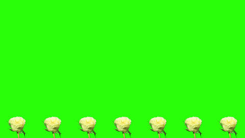4K. Frame of blooming roses time-lapse with green Stock Video Footage