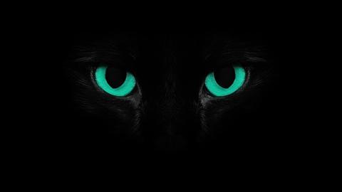 Blue blinkng Cat eyes Stock Video Footage