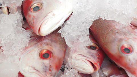 Fish Market Red Fish Heads Dolly Footage