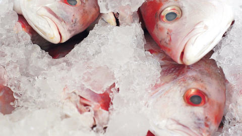 Fish Market Red Fish Heads Dolly Stock Video Footage