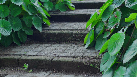 Rustic Steps With Green Plants Dolly Footage