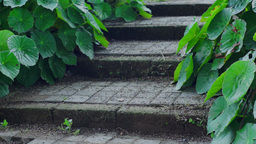 Rustic Steps With Green Plants Dolly Stock Video Footage