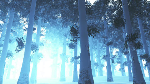 Deep Winter Forest 2 Stock Video Footage