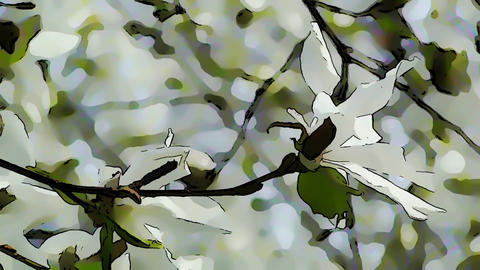 Liliodendron Tulip Tree Spring Comic Marvel 3 Stock Video Footage