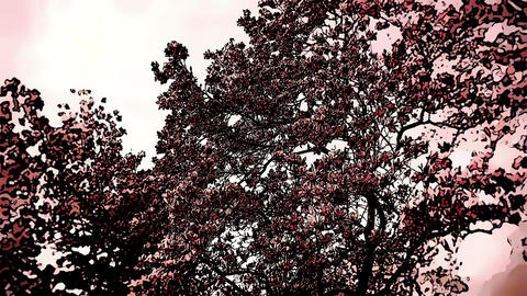 Liliodendron Tulip Tree Spring Comic Marvel 4 Stock Video Footage
