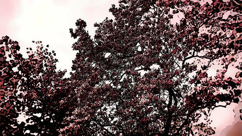 Liliodendron Tulip Tree Spring Comic Marvel 4 Footage