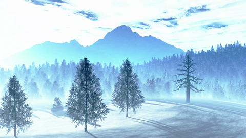 Mysterious Northern Forest Winter 2 Stock Video Footage