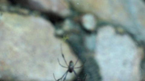 Spider Waiting For Prey stock footage