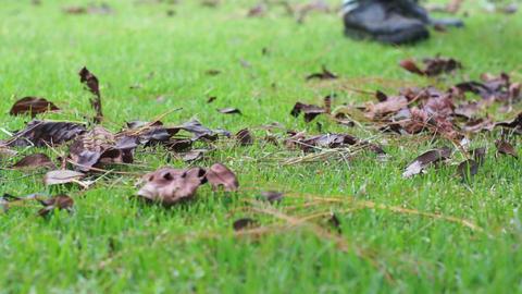Raking Lawn Closeup Dolly Stock Video Footage