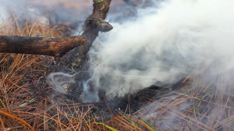 Bushfire Stock Video Footage