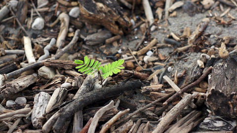 Green Plant Among Dead Wood Dolly Stock Video Footage