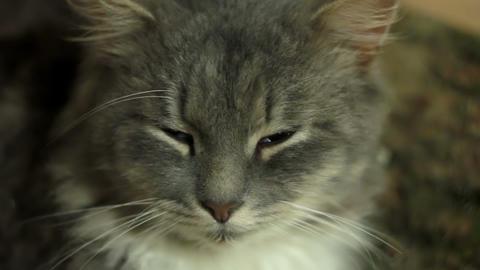 Cat 1 Stock Video Footage