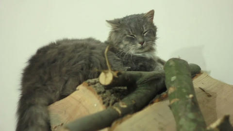 Cat on Wood Stock Video Footage